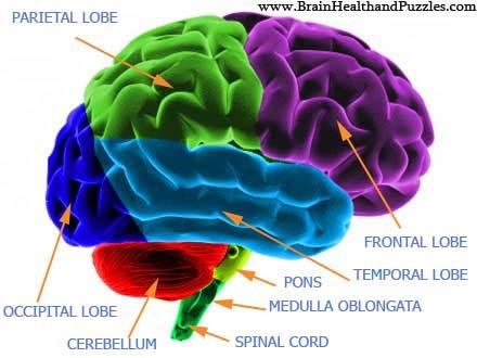 TKG KNOW: Sculpt Your Brain!